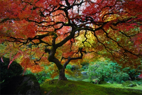 Japanese Garden - Portland Oregon